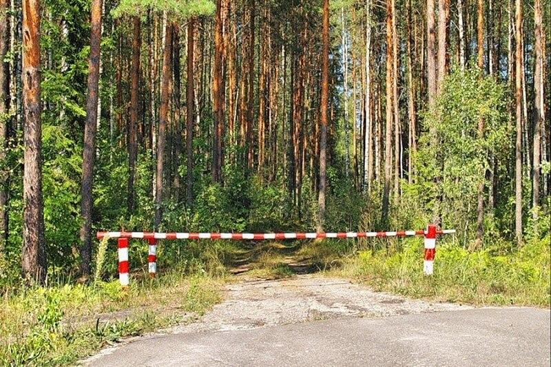 Запреты и ограничения на посещение лесов действуют в 17 районах Беларуси