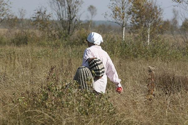 «Тихая охота»: что должны знать белорусы, отправляясь в лес за грибами и ягодами